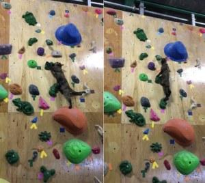 kitty_rock_climbing
